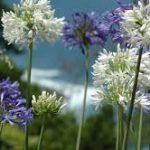 Trévou-Tréguignec un concours de fleurissement; inscrivez-vous en mairie au plus tard pour le15 juin