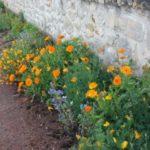 entretien des pieds de murs….    les riverains sont autorisés et même incités  à fleurir ou végétaliser leurs pieds de murs…                  Trévou-Tréguignec