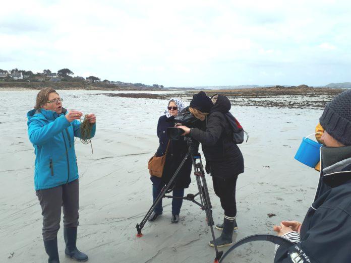 Trévou-Tréguignec  Régine QUÉVA spécialiste des algues et leur utilisation en alimentation…ce vendredi 13 avril au Journal Télévisé de 20h sur TF1 la cueillette des  algues au Royau et l'atelier culinaire à la mairie; vidéos ici.