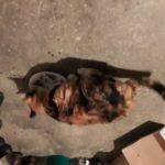 Trévou on nous a signalé un chat perdu du côté du Royau