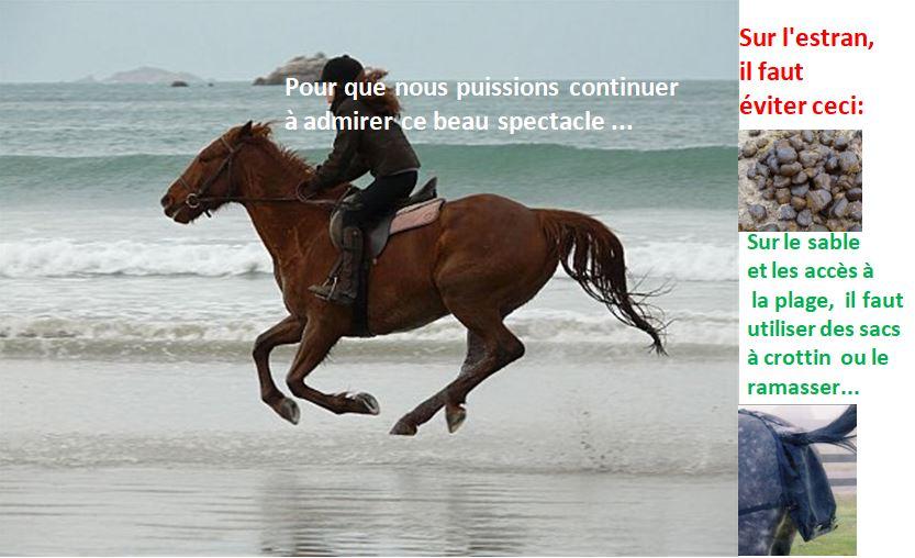 Les cavaliers doivent veiller à ne pas laisser de crottin sur l'estran ni sur les entrées de plage… juste une règle de bonne conduite pour bien  vivre ensemble…        Trévou-Tréguignec