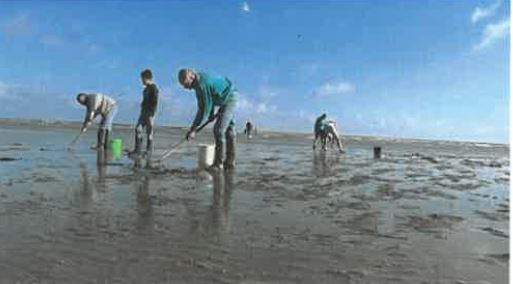 Pêche: quelques règles pour quelques espèces; taille, quantité, période de pêche                        Trévou-Tréguignec