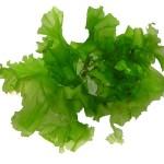 Les algues vertes en quelques chiffres