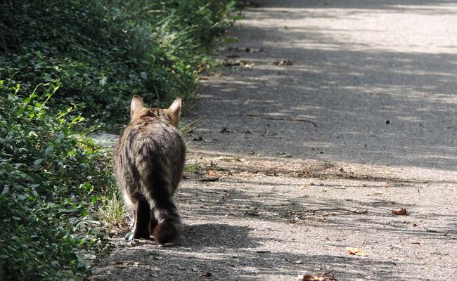 Trévou-Tréguignec halte aux chats errants… avec ou sans collier…
