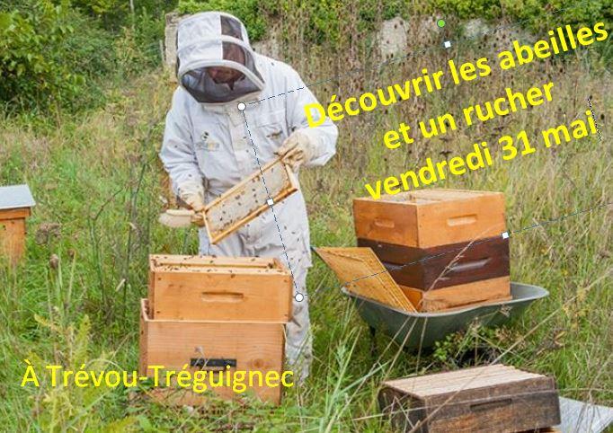 Une formation sur les ruchers, les abeilles,  par un professionnel avec mise en ruches des essaims élevés,  sur un rucher à Trévou vendredi  c'était passionnant!     Trévou-Tréguignec
