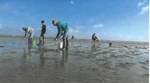 Actuellement : grandes marées: prudence…     Pêche: quelques règles pour quelques espèces; taille, quantité, période de pêche                        Trévou