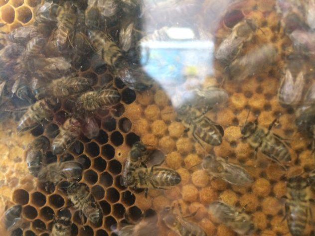 Déclarer vos ruches (dès la première) c'est une obligation et c'est le moment