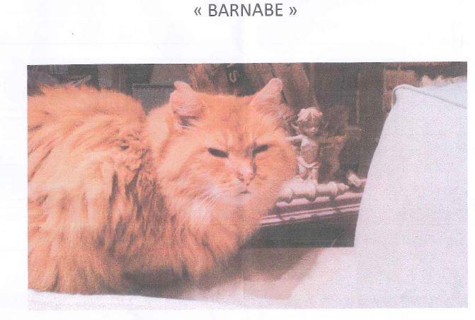 """le chat """"Barnabé"""" a disparu… l'auriez-vous vu?"""
