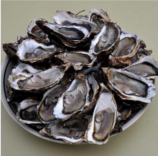 Des huîtres en vente directe du producteur, au marché de Trévou-Tréguignec le mardi matin, au bourg et sur le front de mer de Trestel le samedi et le dimanche (livraisons possibles)