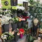 Passiflore :  Emmanuelle, votre fleuriste à Trévou-Tréguignec vous accompagne pour fleurir les tombes de vos défunts même pendant cette période (dérogation exceptionnelle)