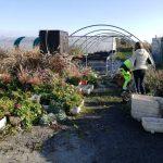 Succès de la distribution des  plants des jardinières  aux trévousiens de samedi matin. L'opération sera reconduite