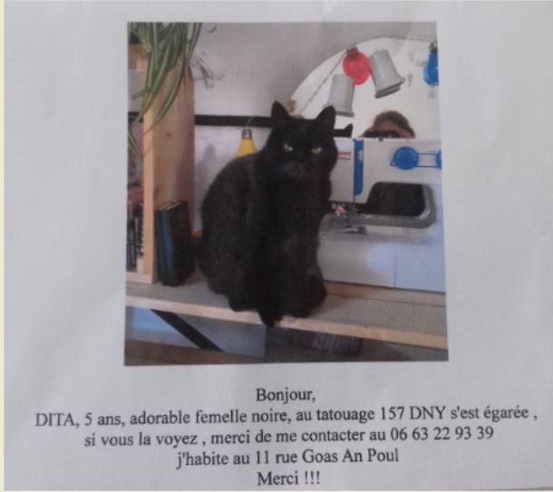chat perdu à Goas An Poul en Trévou-Tréguignec