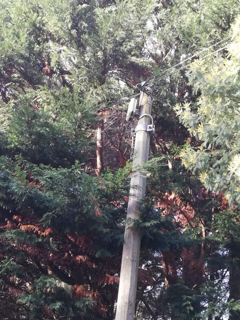 Des fils électriques  ou téléphoniques qui risquent de casser en cas de tempête… avis aux propriétaires des arbres un peu envahissants…