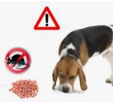 Attention à ne pas disposer de mort aux rats n'importe où..